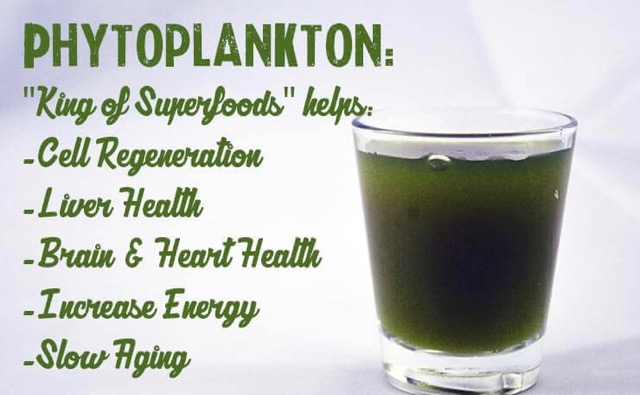 Phytoplankton-beneftis-for-cell-health-liver-health-brain-and-heart-health-energy-and-more_1024